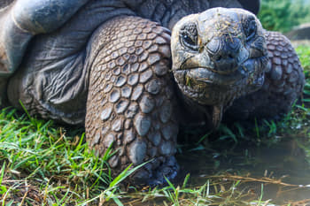 are all website desitned to be as slow as a tortoise